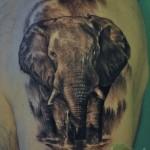inkin - tatouage éléphant sur épaule - biz'art tattoo.JPG