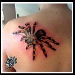 inkin - tatouage araignée mygale sur épaule - aux zombies tatoués.jpg