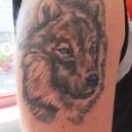 inKin-tatouage-loup-yeux-bleus-bras-HARVEST TATTOO.jpg